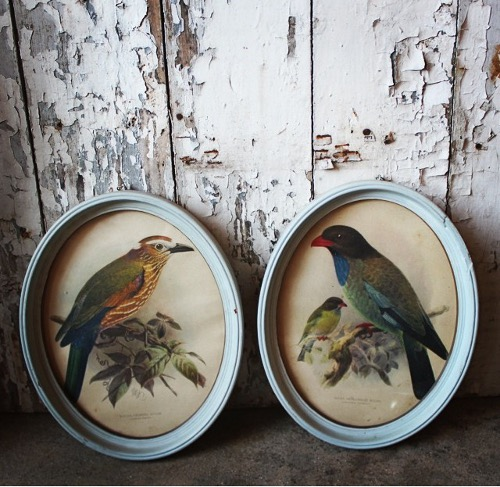framed bird prints via rummage
